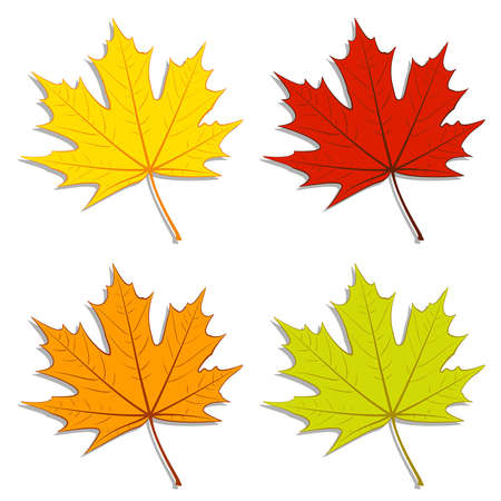 Set of colorful maple leaves. EPS10 vector. Vector
