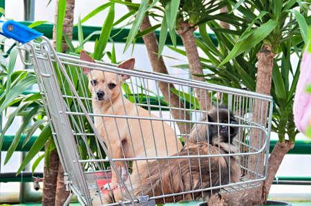 市場のカートに 2 匹の犬