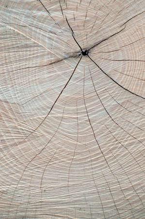 sawed: Sawed Wood Texture  Closeup  Vertical view
