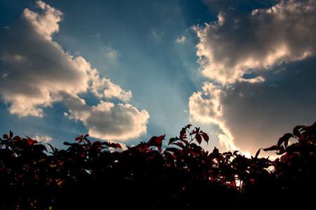quick hedge: Scenic Background - hedgerow over cloudy sky with sunbeams.