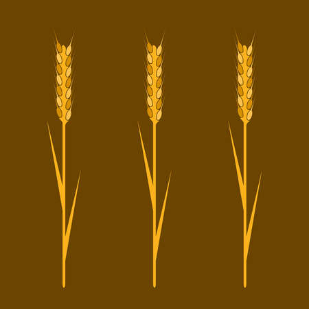 wheaten: Wheaten ear- Design element. EPS10 vector image. Illustration