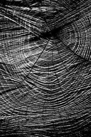 Sawed Wood Texture. Vertical view.