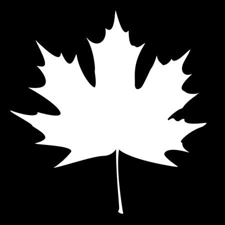 Maple Leaf Silhouette for your design. EPS10 vector illustration. Vector
