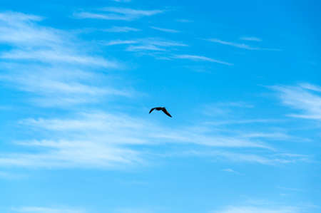 ruch: Blue Sky Background with gull flying far away.
