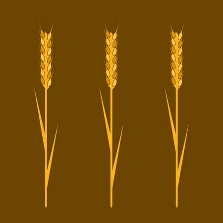 wheaten: Wheaten ear- Design element.
