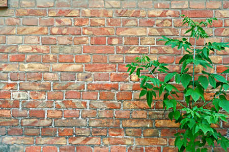 brick background: Red Bricks And Green young tree.