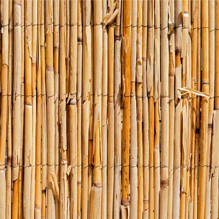 wattle: Wattle Fence Texture