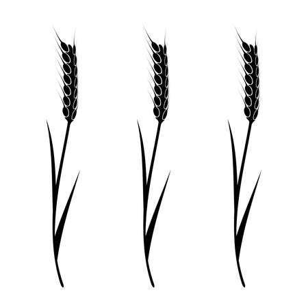 wheaten: Wheat