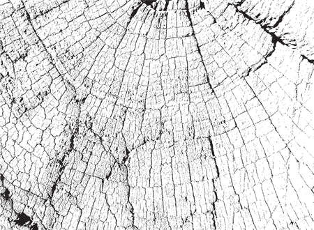 Sawed dry cracked Wood with annual circle Overlay Texture for your design. EPS10 vector. Illustration