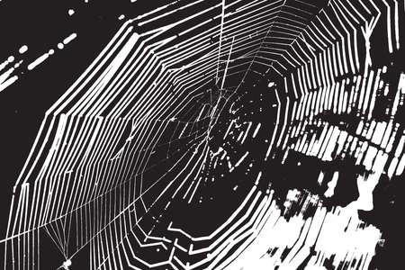 spider web: Spider Web Overlay Texture