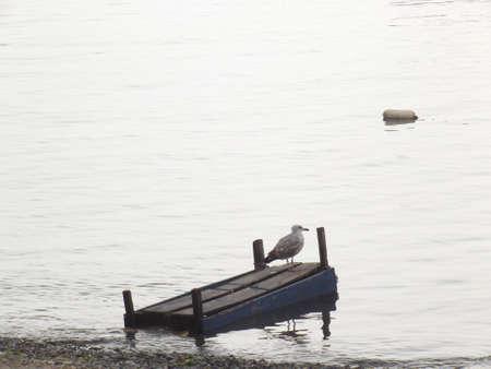 depressive: seagull in depressive mode  Stock Photo