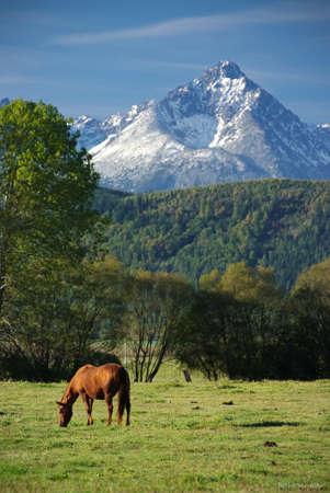 Horse under Gerlach Reklamní fotografie