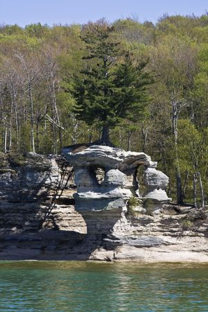 Tree in Pictured Rocks National Lakeshore photo