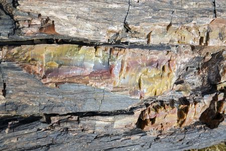 Petrified Wood - close up. Petrified Forest National Park. photo