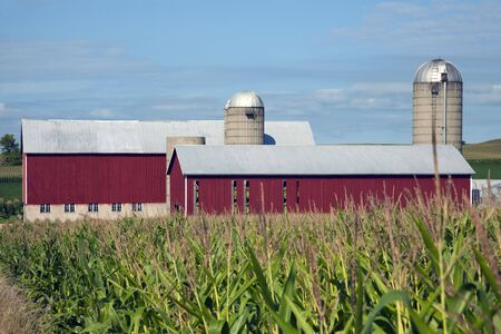 Corn and Red Farm Buildings photo