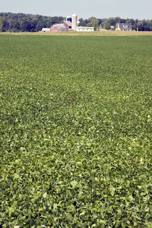 Green soybean field, red farm buildings in the background.