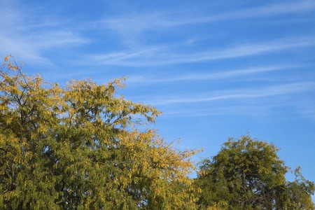 Perfect Autumn Afternoon - colorful trees and blue sky Stock Photo - 8111089