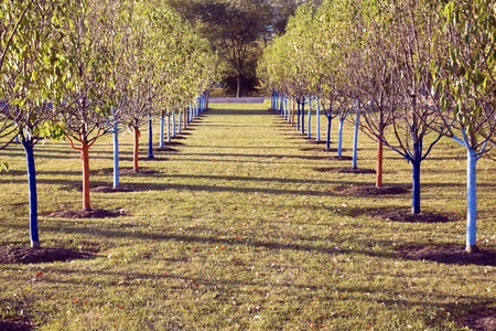 protected tree: Tree rows in the park - protected for winter.