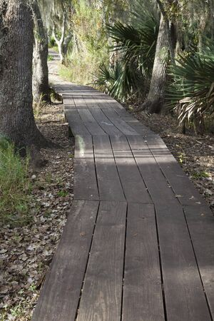 Jean Lafitte Preserve - New Orleans area, Louisiana  Stock Photo - 8484827