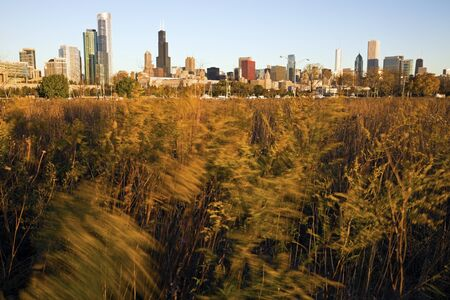 aon: Chicago from Northerly Island with prairie in the foreground