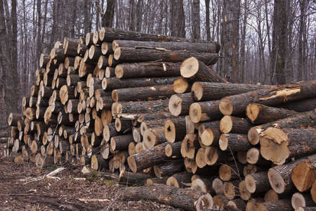 Wood ready to be taken from the forest - seen in Wisconsin. 版權商用圖片