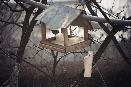 bird feeder: Bird house - feeding birds during the winter