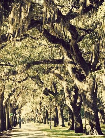 Trees in downtown of Savannah, Georgia Stock Photo