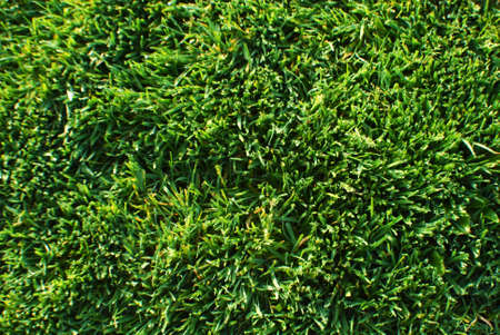 Green Fresh Cut Spring Grass Field