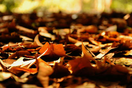 Abundance of dried leaves covering the forest floor. photo