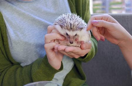 Girls peting African dwarf hedgehog in cafe shop
