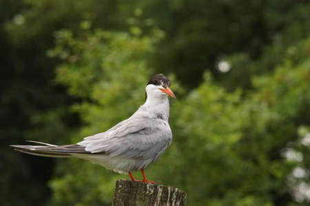 a tern on a pole Banque d'images - 107273156