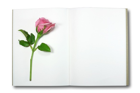 rose on note book, isolate  photo