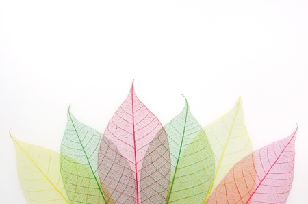 colored skeleton leafs abstract background  photo
