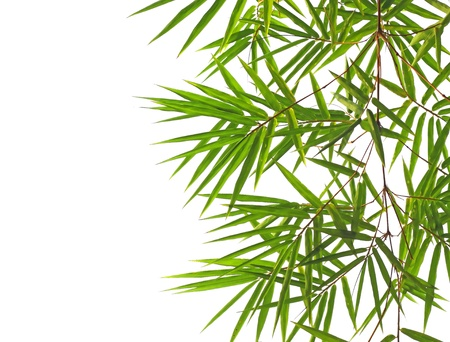 Bamboo leaves isolated on white.  Banco de Imagens