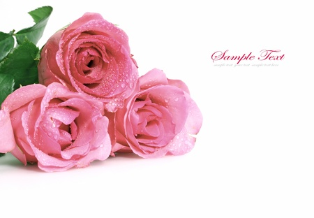 three pink roses  photo