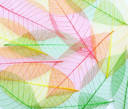 colored Skeleton leafs seamless abstract background  photo