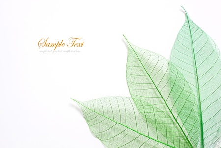 Skeleton leafs seamless abstract background  Stock Photo