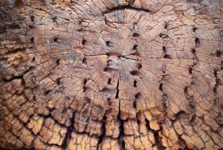 old macro: Textura de madera vieja corte