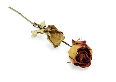 dode bladeren: gedroogde roos