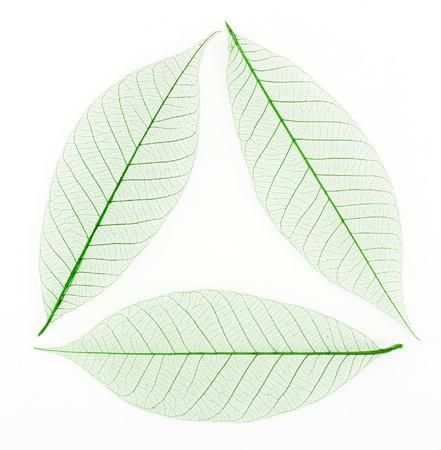 재활용 기호와 같은 골격 잎 배경