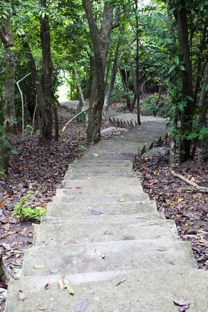 Stairway in the jungle  photo