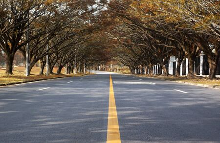 on both sides: road with trees on both sides