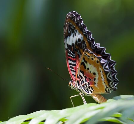 Beautiful butterfly on green leave photo