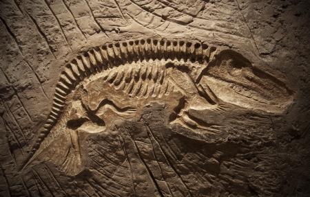 Model Dinosaur fossil