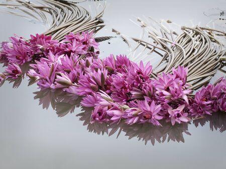 lotiform: asian pink lotus flower