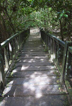 boardwalk trail: wood bridge in forest