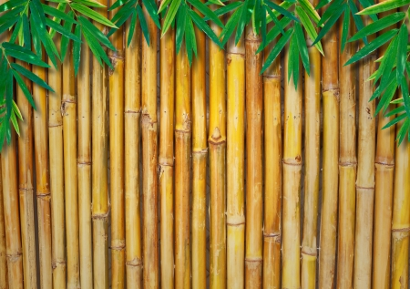 Background Texture Of A Bamboo Fence  with bamboo-leaves photo