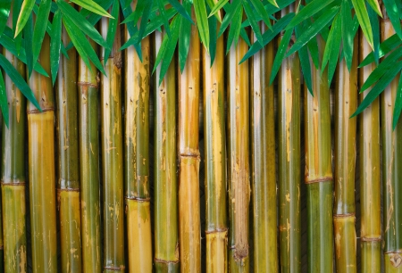 bamboo background with leaves photo