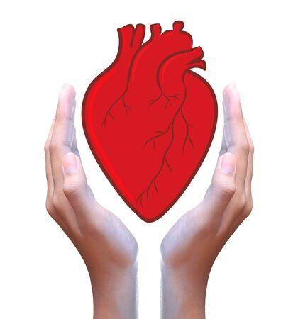 coronary: red heart in hand Stock Photo