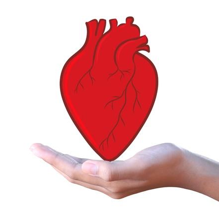 donacion de organos: coraz?n rojo en la mano Foto de archivo